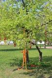 Árvore da Páscoa Fotografia de Stock Royalty Free