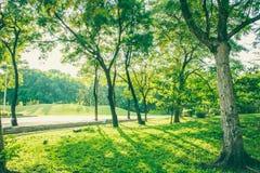 A árvore da paisagem Foto de Stock Royalty Free