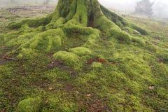 Árvore da paisagem com raizes Fotos de Stock Royalty Free