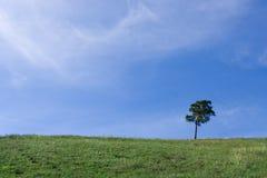 Árvore da paisagem no campo Fotos de Stock Royalty Free