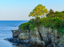 Árvore da paisagem no penhasco do oceano imagem de stock royalty free