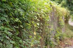 Árvore da parede Foto de Stock