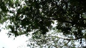 A árvore da parte inferior, que se está movendo em um círculo video estoque