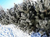 Árvore da pele Fotos de Stock Royalty Free