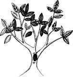 Árvore da pena e da tinta Fotografia de Stock Royalty Free