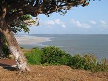 Árvore da praia Fotografia de Stock Royalty Free