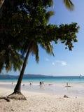 Árvore da praia Foto de Stock