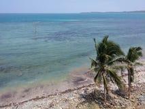 Árvore da praia Imagens de Stock