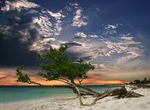 Árvore da praia da noite fotografia de stock