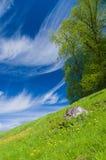 Árvore da primavera no montanhês de florescência do prado sob o céu azul Fotografia de Stock Royalty Free