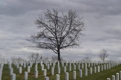 A árvore da proteção Fotos de Stock