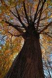 Árvore da queda foto de stock