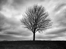 Árvore da queda Imagem de Stock Royalty Free
