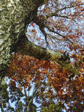 Árvore da queda imagem de stock
