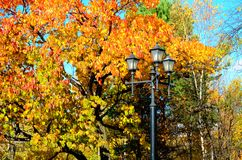 Árvore da queda Fotos de Stock Royalty Free