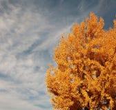 Árvore da queda Fotos de Stock