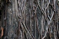 Árvore da raiz na floresta/complexidade imagem de stock royalty free
