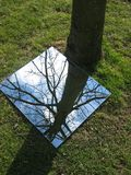 Árvore da reflexão Imagem de Stock
