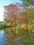 árvore da reflexão da flor da opinião da natureza Foto de Stock