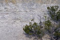 Árvore da rocha Fotografia de Stock Royalty Free
