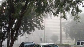Árvore da rua do clima do tempo fotografia de stock royalty free