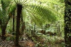 Selva tropical Imagens de Stock