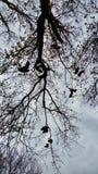 Árvore da sapata foto de stock