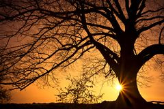 Árvore da silhueta Fotos de Stock Royalty Free