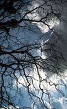 Árvore da silhueta contra o sol Imagem de Stock Royalty Free