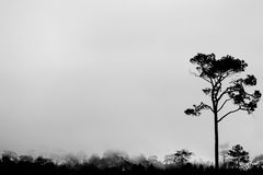 A árvore da silhueta de BW Fotos de Stock