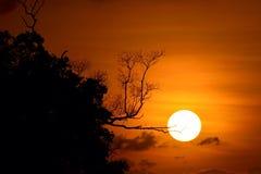 Árvore da silhueta do por do sol Imagens de Stock Royalty Free