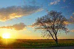 Árvore da silhueta no céu do por do sol Fotografia de Stock