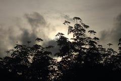 Árvore da silhueta no nascer do sol com árvore Imagens de Stock