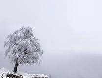 Árvore da solidão do inverno Imagens de Stock Royalty Free