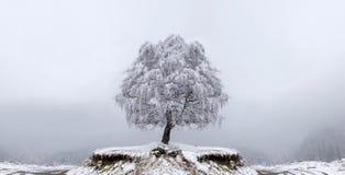 Árvore da solidão do inverno Fotografia de Stock Royalty Free