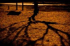 Árvore da sombra Fotos de Stock Royalty Free