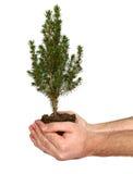 Árvore da terra arrendada da mão. Imagens de Stock Royalty Free