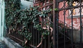 Árvore da uva em uma cerca no centro histórico de Tbilisi, Geórgia foto de stock