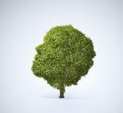 Árvore dada forma cabeça Fotografia de Stock Royalty Free