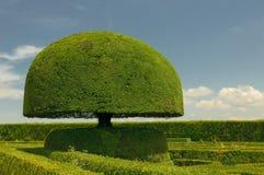 Árvore dada forma cogumelo Fotos de Stock Royalty Free