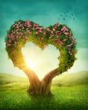 Árvore dada forma coração fotos de stock