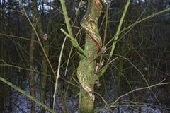 Árvore dada forma estranha foto de stock royalty free