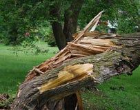Árvore danificada Imagem de Stock Royalty Free