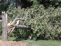 Árvore danificada por ventos fortes Fotografia de Stock