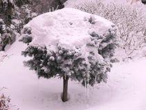 Árvore das coníferas sob o chapéu da neve foto de stock royalty free