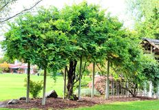 Árvore das naturezas Imagem de Stock