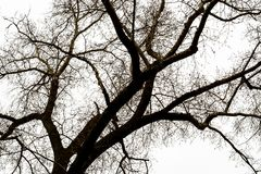 Árvore das silhuetas sem folhas foto de stock