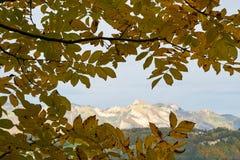 A ?rvore de ?ustria da paisagem do outono sae do fundo do c imagem de stock royalty free