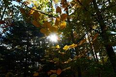 A ?rvore de ?ustria da paisagem do outono sae do fundo do c?u imagem de stock royalty free