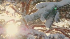 Árvore de abeto bonita coberta com a neve, fim acima da vista Fotografia de Stock Royalty Free